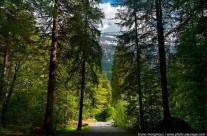 El bosque no es la basura